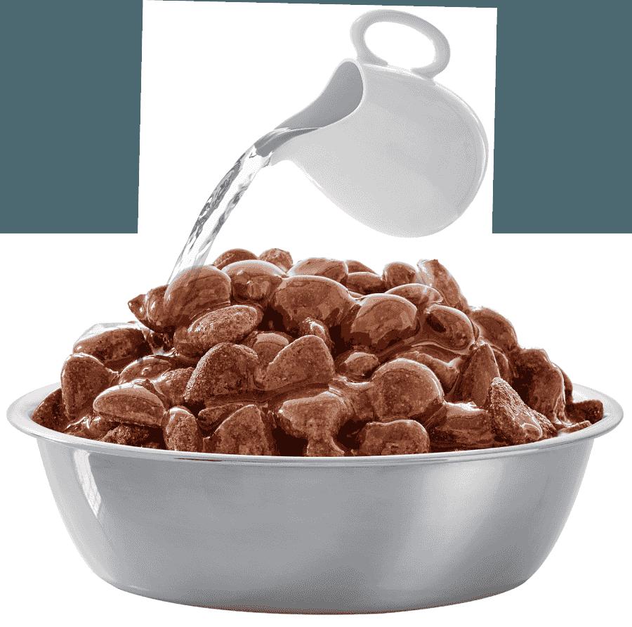Bobtail South Africa | Saucy dogfood